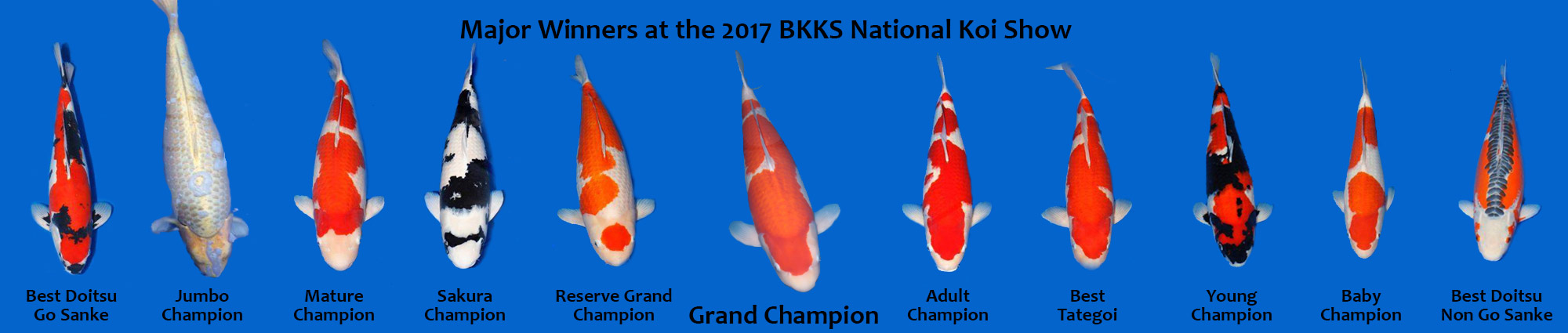2017 National Koi Show Winners